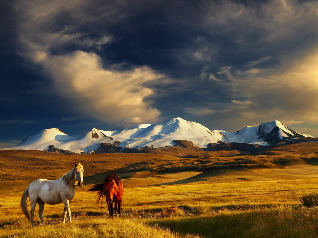 Horses in Mongolia 1024