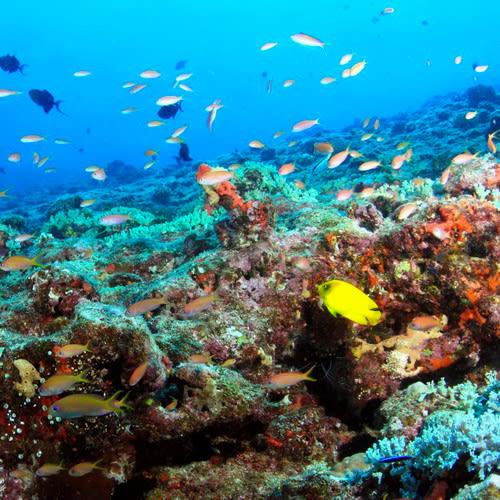 Okinawa Underwater 500