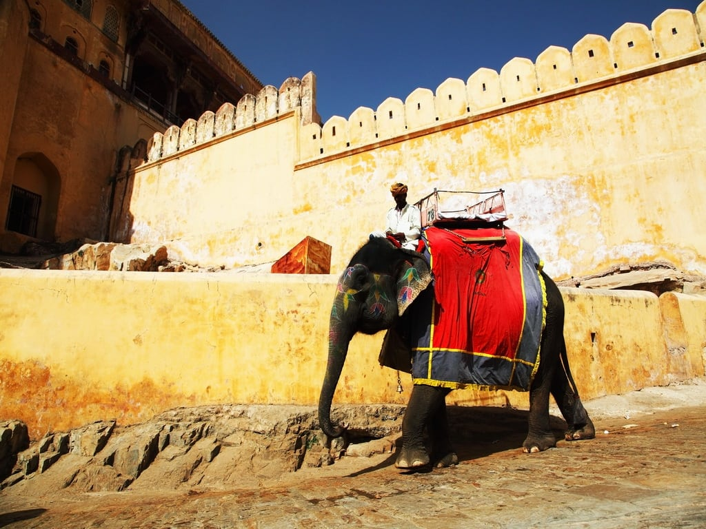 Amber Fort Elephant Jaipur 1024