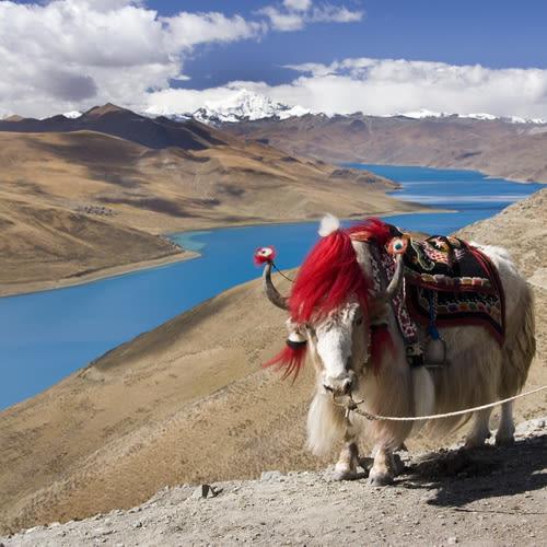 Tibet500