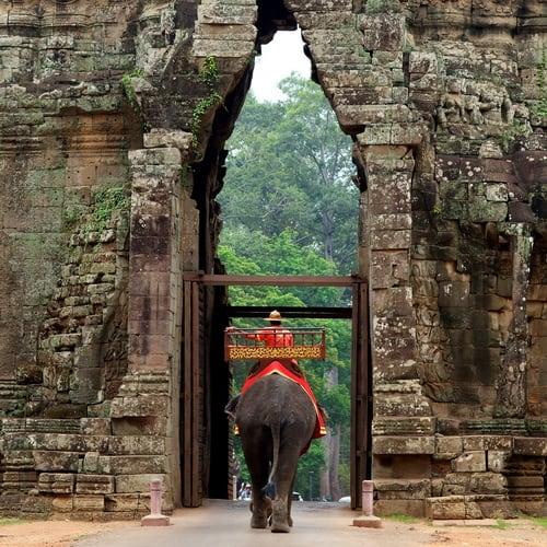 Angkor Elephan500