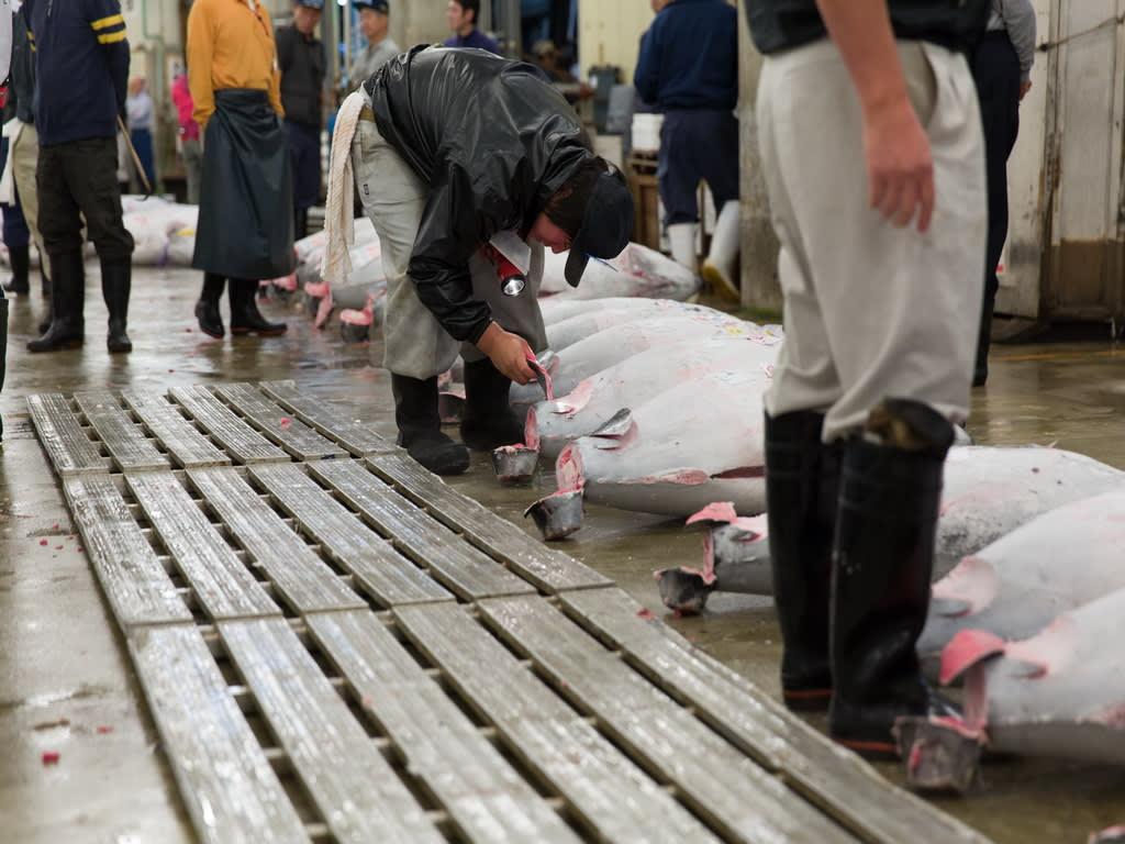 Tsukiji Fish Market Tokyo 1024