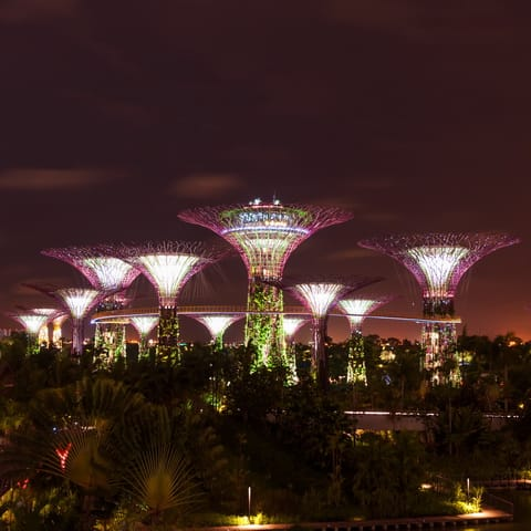 Singapore Super Trees Excurions