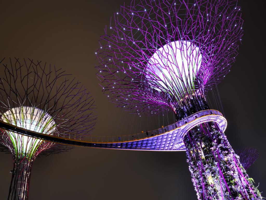 Singapore Super Trees 2 1024