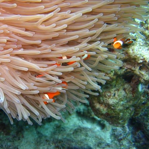 Okinawa Coral reef500