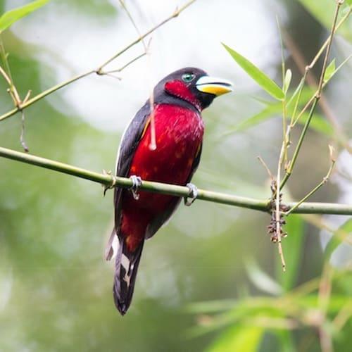Birding500