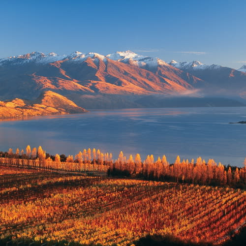 LRippon-Vineyard-Lake-Wanaka-500